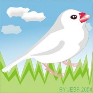 白文鳥插畫