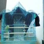 造型鳥籠1