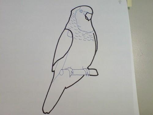 [绘图]鹦鹉轮廓 | 可爱宠物的0.1毫米