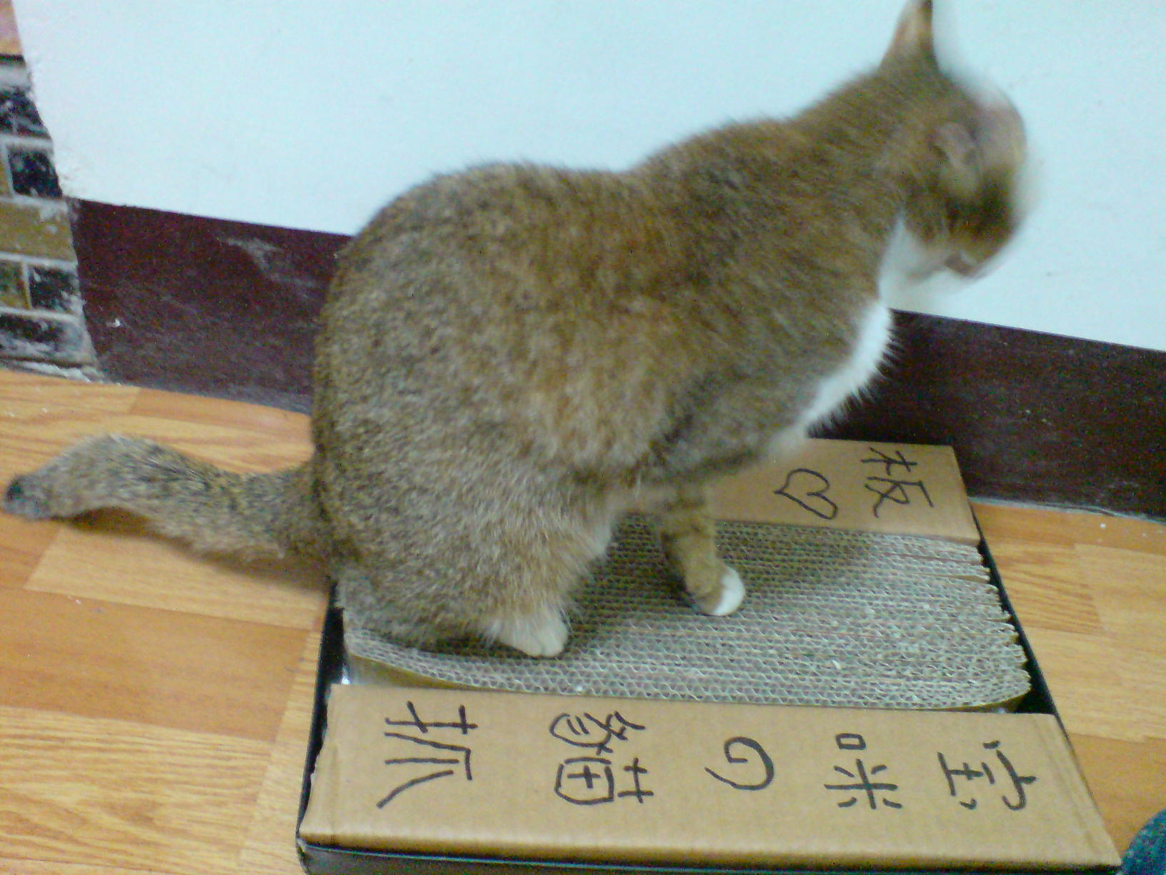 [diy]猫抓板diy | 可爱宠物的0.1毫米